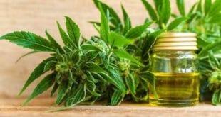 cannabidoil weed marijuana